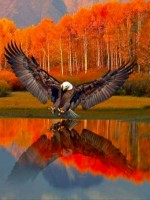 WingIt Friday Drama Avatar?id=1600056&m=75&t=1459289867